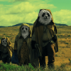 Wastelander Panda Series Coming Exclusively to ABC iview